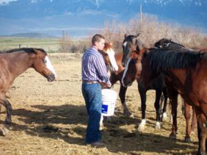 Man feeds equine therapy horses